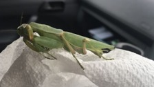 The RSPCA was contacted on Friday (10 March) after the carnivorous insect was found in a container which had come over from India.