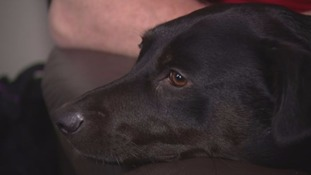 Special award for dog who detects when her owner's going to pass out