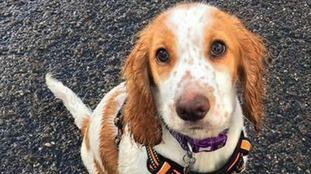 Moped kills widow's much-loved puppy in park