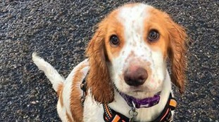 """Rorie, a six-month-old cocker spaniel, was """"dead before he hit the ground""""."""