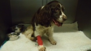 Council searches for owner of dog who was put down