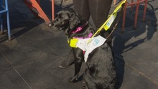 Jackie the Guide Dog