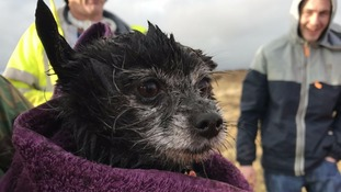 Chihuahua rescued after five days trapped down mountain hole