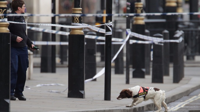 A police dog and handler close to the Palace of Westminster