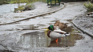 Bad weather for ducks! A dry weekend is in store.