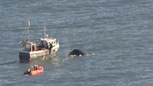 WATCH: Whale freed from fishing nets in complex rescue