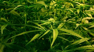 A 38-year-old man was arrested on suspicion of possession of cannabis