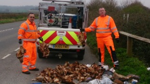 Dozens of chickens dumped on busy road