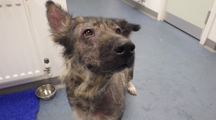 North East sees a rise in animal cruelty convictions