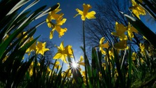 Police took daffodils off David Taylor's children