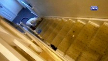 Baby the bulldog was filmed being stamped on and thrown down the stairs by its owners in North Yorkshire.
