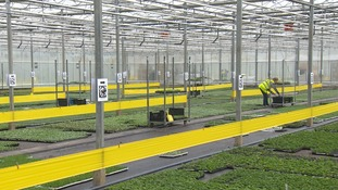 Volymary Ltd grows plants and shrubs with a 60% Eastern European workforce.