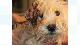 Animal cruelty investigations rise 5% in the South West