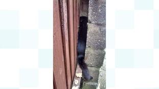Stuck cat