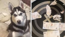 Coventry City fan Jamie Conneely awoke one morning to find his dogs had chewed his cup final tickets.