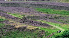 North Yorkshire Moors.