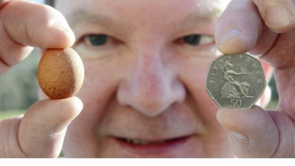 Paul Rae believes he's found the world's smallest hen egg