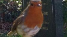 Robin visit