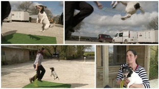 Jack Russell terrier sets new skipping world record