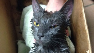 Cat survives being tied up, doused in gasoline and dumped in bin