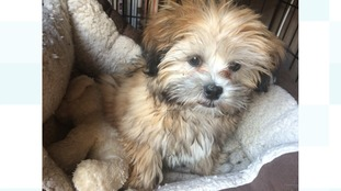 Bobby the puppy is back with his owners after burglary