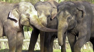 The centre in Bedfordshire will home nine Asian elephants