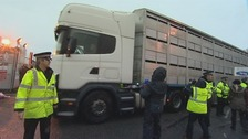 live exports; ramsgate, kent