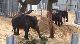 The Whisnade Zoo elephants are eagerly awaiting the arrival of the Queen.