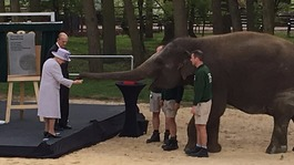 Elephants go bananas for Queen at zoo