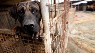 Taiwan bans sale and consumption of dog and cat meat