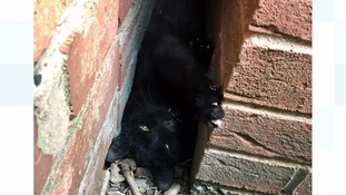 Cat stuck between two walls rescued thanks to washing up liquid