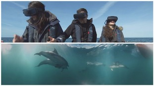 360° virtual reality experience lets people swim with dolphins off the Pembrokeshire coast