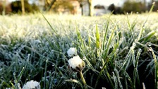 Gardeners Beware! - Frosty couple of nights ahead