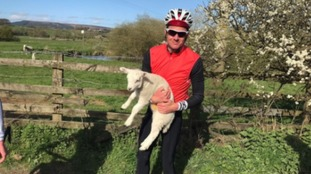 Jonny Brownlee pictured with one of the escaped lambs.