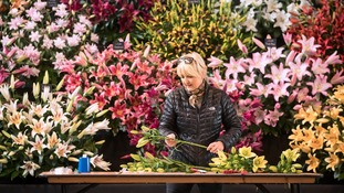 Thousands expected at Harrogate Flower Show