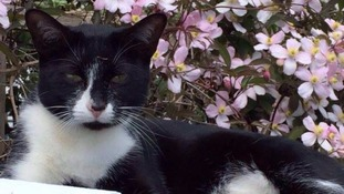 Poppy was one of the cats killed in the Hampshire area.