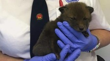 'A devastating impact' - Fox cubs killed by grass fire