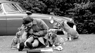 The Queen has adored corgis for years