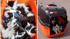 Six newborn kittens were found abandoned in a cat carrier