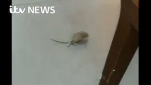 Mouse 'placed in restaurant for sabotage'