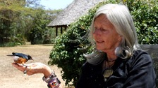 Conservationist Kuki Gallman shot in Kenya