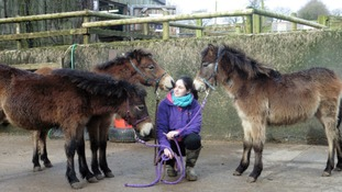 The Exmoor Pony Centre