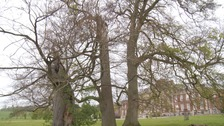 Fight to protect ancient trees and woodland