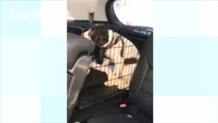 Watch: why a passer-by felt the need to smash a stranger's car window to rescue dog inside