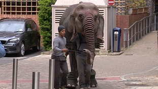 Oona, the elephant, will be performing all week