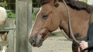 Attackers slash horses' faces before setting their stable alight