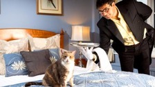 Experts say that owning animals has significant health benefits