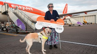 Frequent flyer - Joey the guide dog