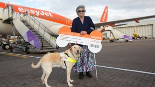 Joey the labrador named EasyJet's 'most frequent flying' dog