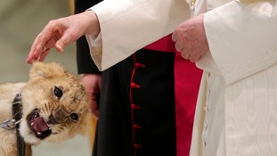 Pope Benedict XVI pets a lion cub as he leads a special audience for circus artists and music bands in Paul VI's Hall at the Vatican.
